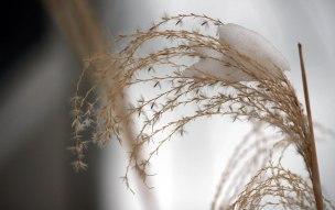 winterweb9